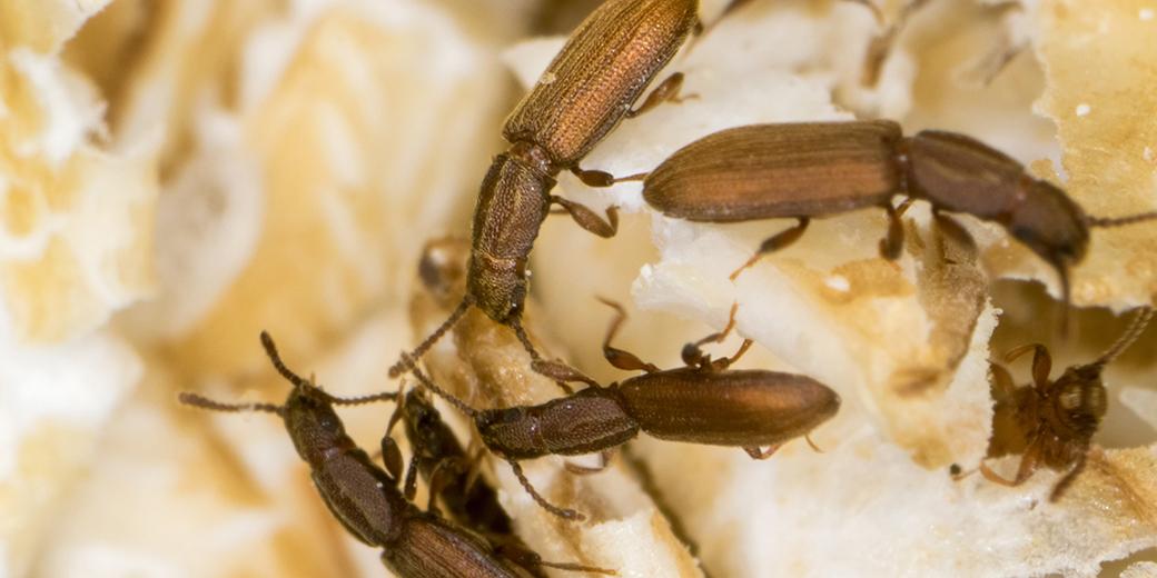 Wie Glyphosat Insekten Schaden Kann [video]