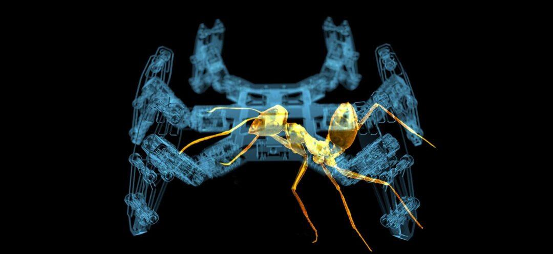 Bionischer Roboter navigiert wie Ameise.  [video]